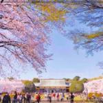小金井公園桜まつり2018はいつ?屋台やライトアップは?穴場情報も!